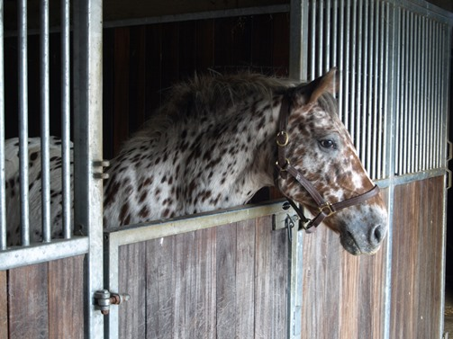 Happy horses - spacious five star stabling for your best friend