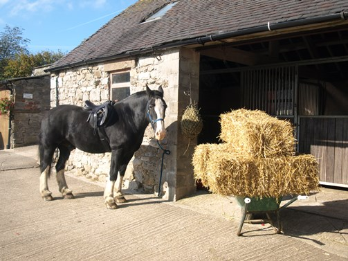 Welcome pack for your horse too! Hay and straw included