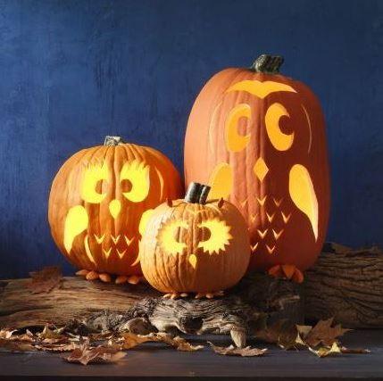 Owls carved pumpkin