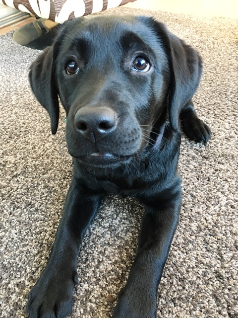 Canine partner puppy Quella