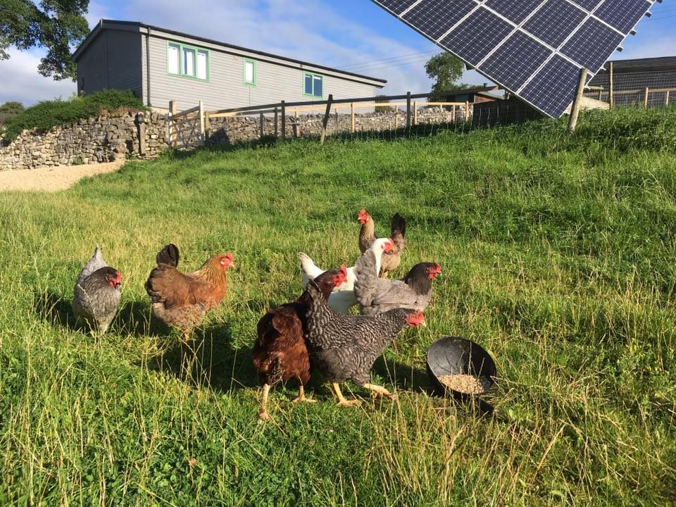 solar panels and hens