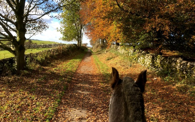Trot along the leafy lanes and trails in the Autumn sunshine