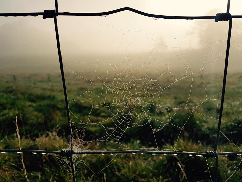 spiders web on a misty morning