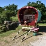 Rose hip gypsy caravan