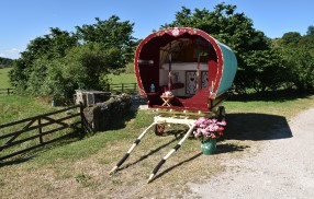 Rose hip gypsy caravan
