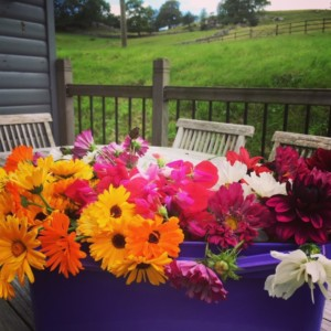 cut flowers for guests