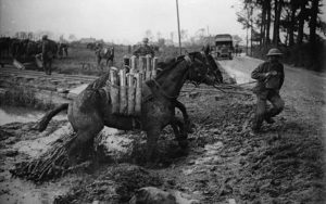 Horses in World War 1