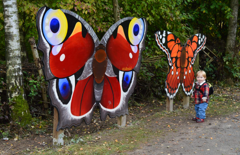 butterfly walk at Carsington