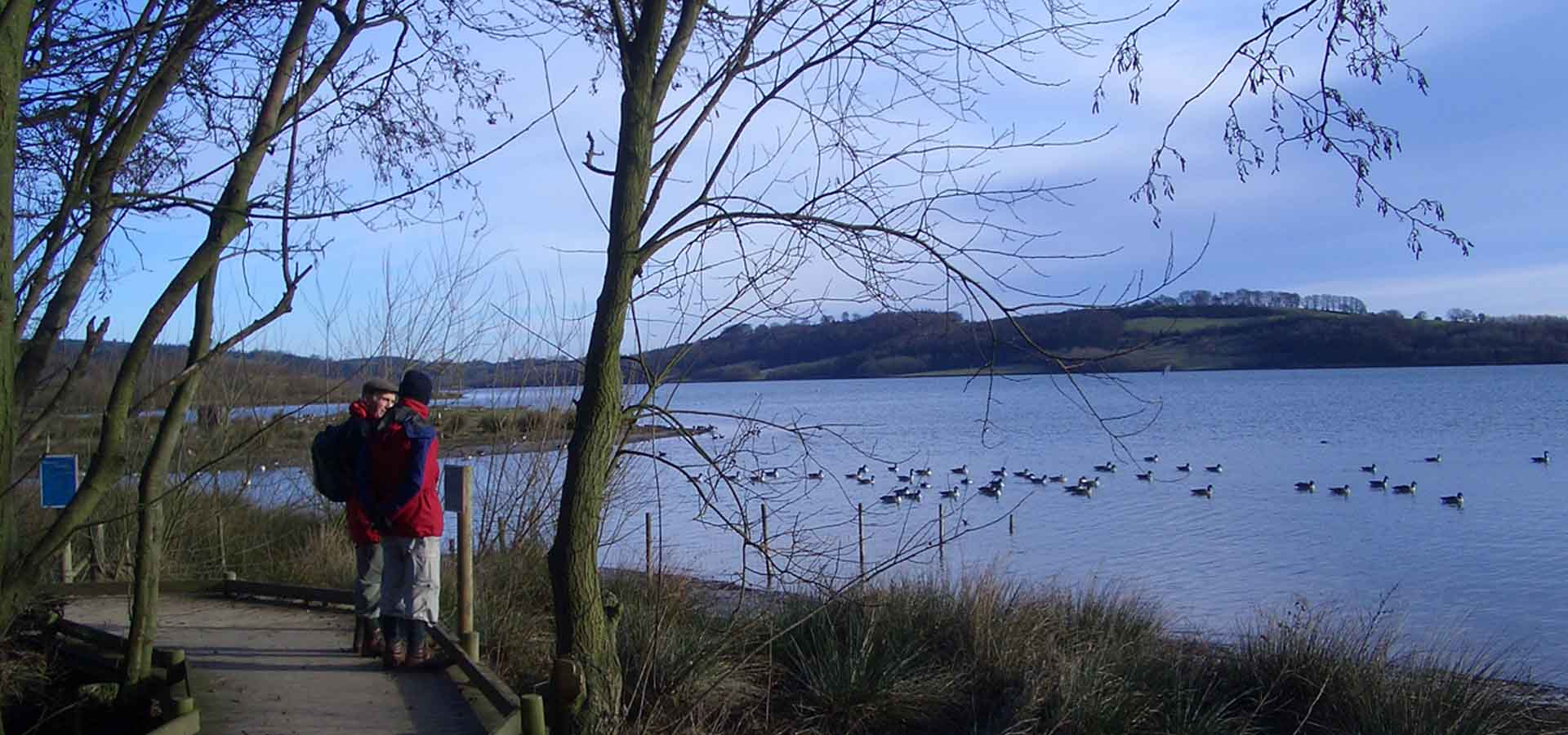 Carsington Water bird reserve