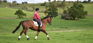 holidays with your horse Peak District