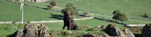 dog walks at Hoe Grange Farm