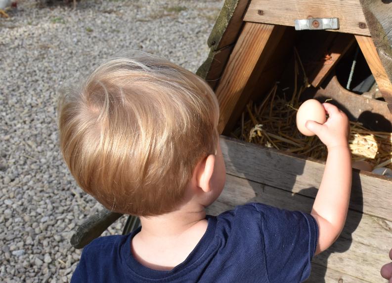 boy collecting eggs