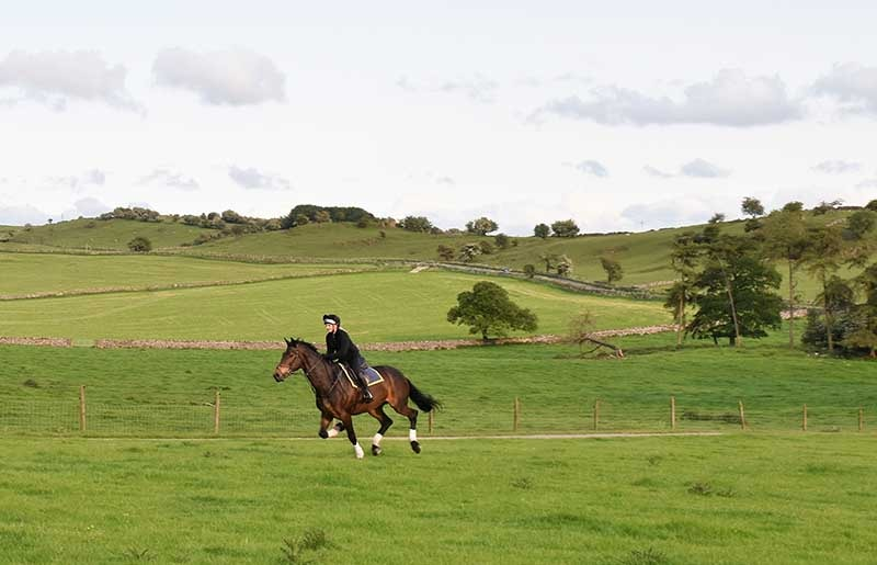 Bring Your Horse on Holiday riding in the fields