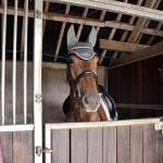 Bring Your Horse on Holiday stables
