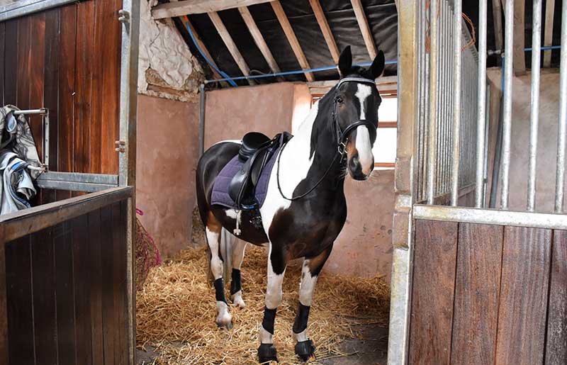 Stabling for horse holidays