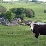 Hoe Grange Farm