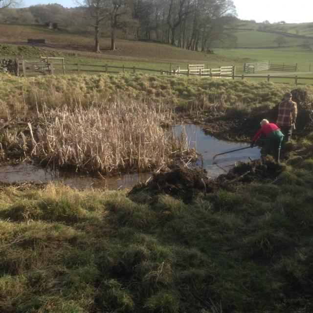Clearing pond by hand