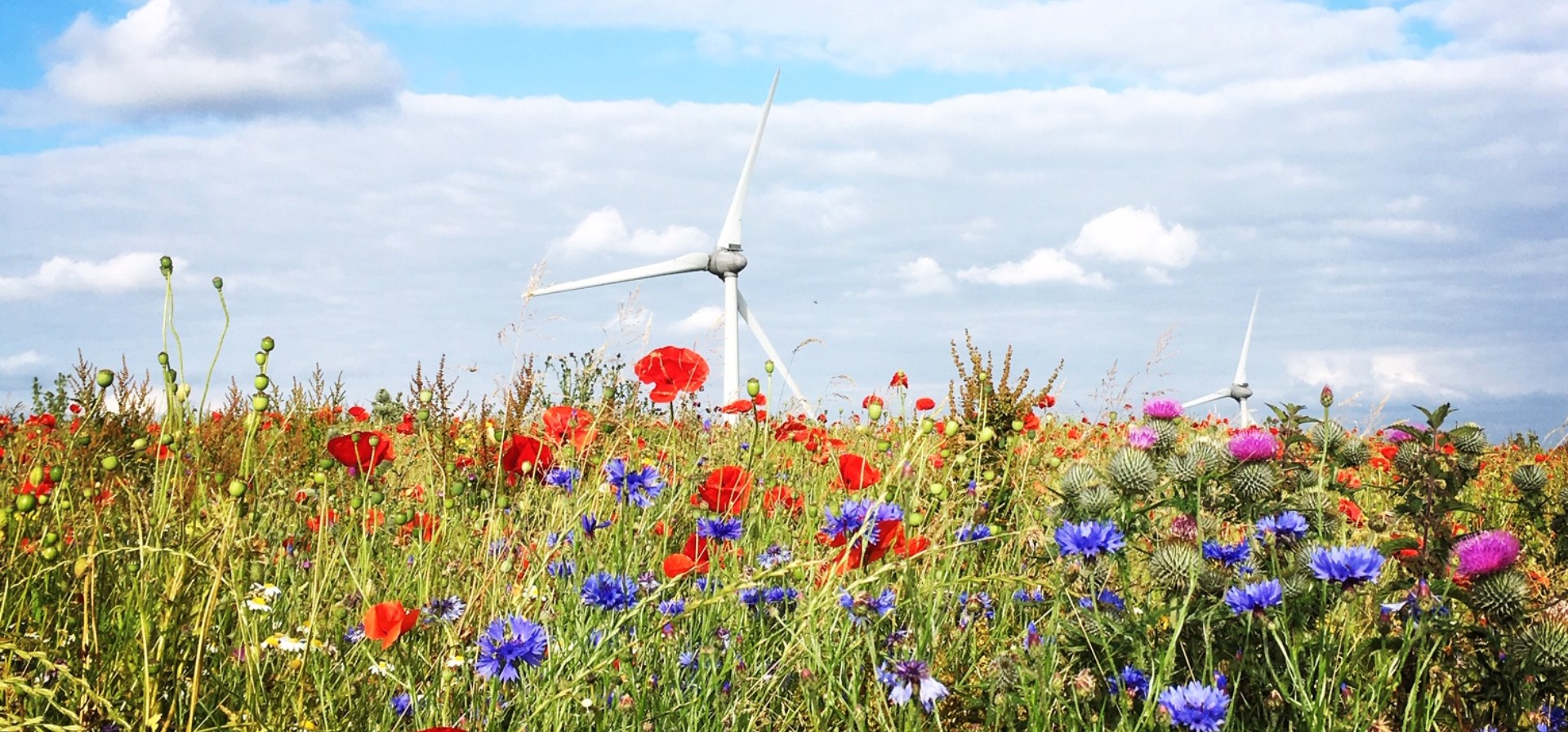 wind turbine in a flower meadow