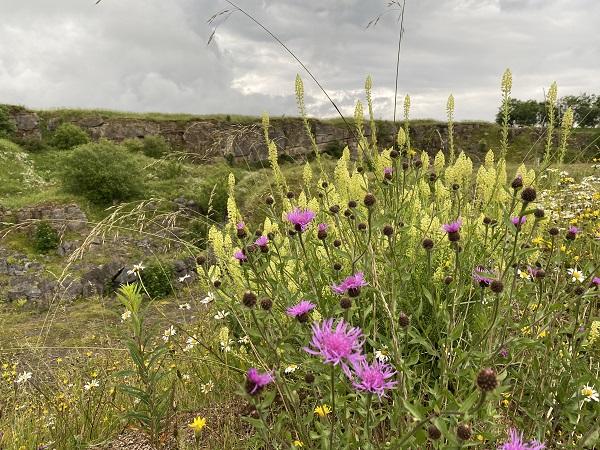 Hoe Grange Nature reserve