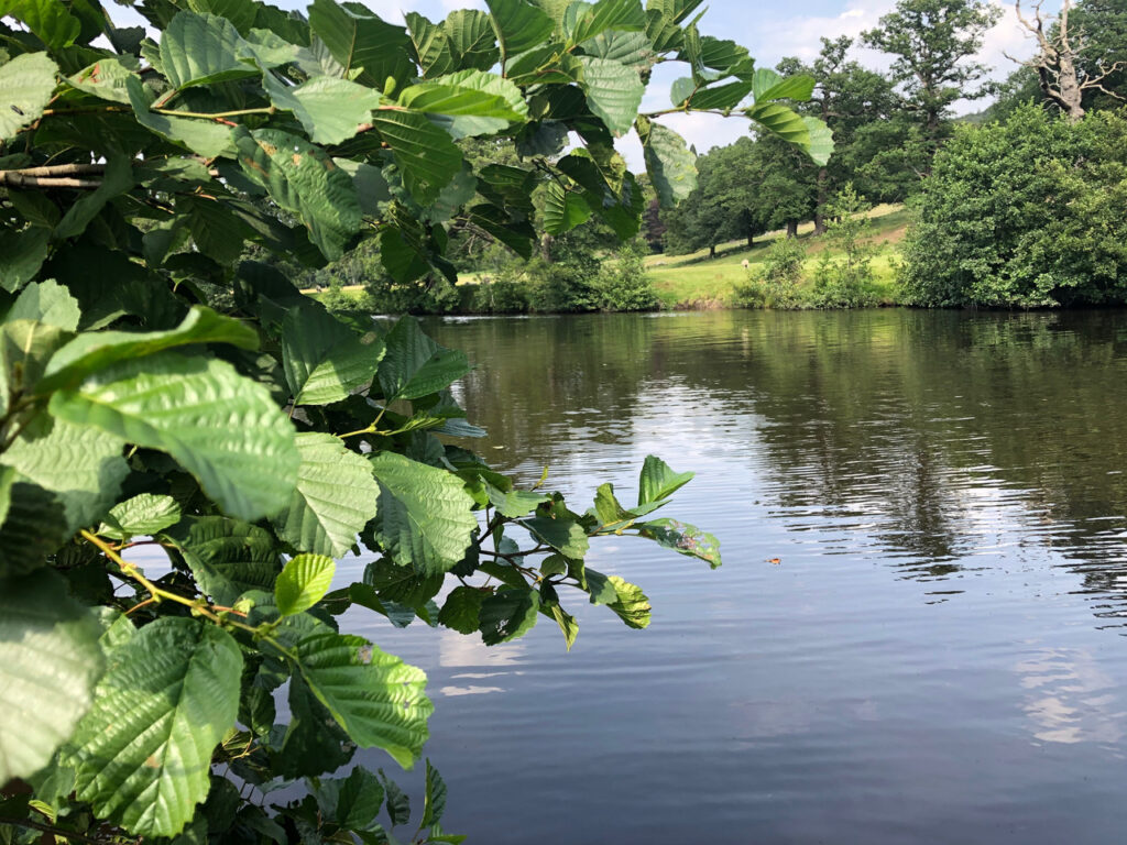 Wild swimming at Chatsworth